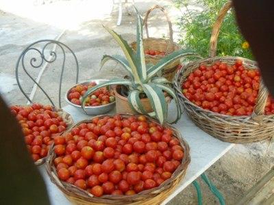cesti di pomodori